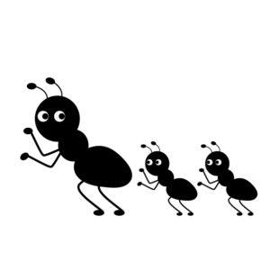 アリの観察2
